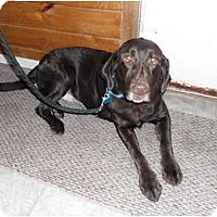 Adopt A Pet :: Jennie - Fort Hunter, NY