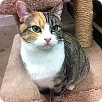 Adopt A Pet :: Happy - Warminster, PA