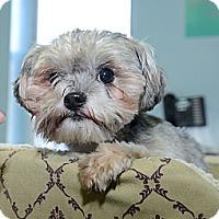 Adopt A Pet :: Shyler - New York, NY