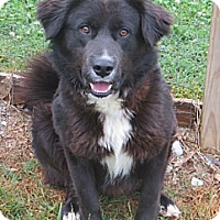 Adopt A Pet :: Bo - PENDING, in Maine - kennebunkport, ME