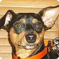 Adopt A Pet :: Blaze - Columbus, OH