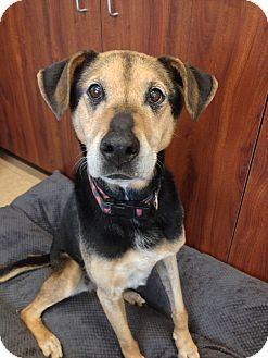 Hound (Unknown Type) Mix Dog for adoption in Chambersburg, Pennsylvania - Sophia