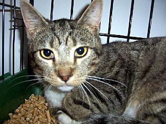 Adopt A Pet :: Rufus - NC  - Liberty, NC