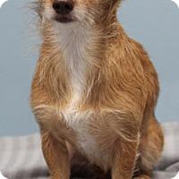 Adopt A Pet :: Ainsley - Jupiter, FL