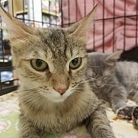 Adopt A Pet :: Kimber - Rosamond, CA