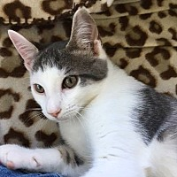 Adopt A Pet :: Fanta - Poughkeepsie, NY