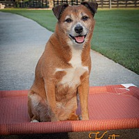 Adopt A Pet :: Kitsu (COURTESY POST) - Alpharetta, GA