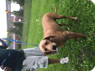 Hound (Unknown Type) Mix Dog for adoption in Monroe, Michigan - Chloe