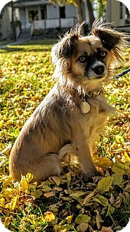 Spaniel (Unknown Type)/Terrier (Unknown Type, Small) Mix Dog for adoption in Edmonton, Alberta - Leah