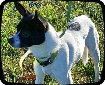 Chihuahua Mix Dog for adoption in Ahoskie, North Carolina - Greg