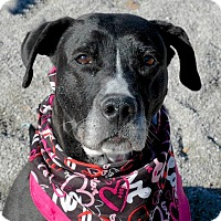 Adopt A Pet :: Betsy - Delaware, OH