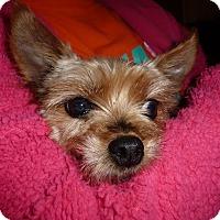 Adopt A Pet :: Daisy-Pending Adoption - Omaha, NE