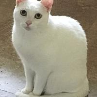 Adopt A Pet :: Mozzy - Lauderhill, FL