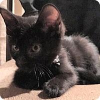 Adopt A Pet :: DeweyW - North Highlands, CA