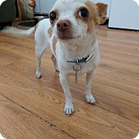 Adopt A Pet :: Pixie - Scottsdale, AZ
