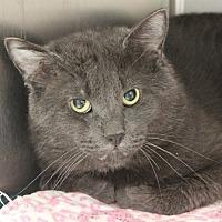 Adopt A Pet :: Fernando - Edmonton, AB
