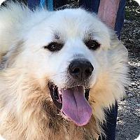 Adopt A Pet :: Savage Thunder - Kyle, TX