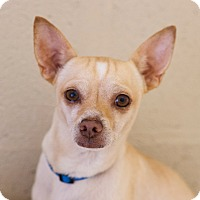 Adopt A Pet :: CHANCE - Marble Falls, TX