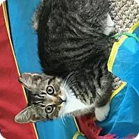 Adopt A Pet :: zz Annimae - Cincinnati, OH