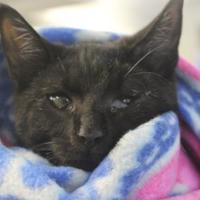 Adopt A Pet :: Bob - Watertown, NY