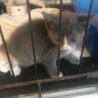 Adopt A Pet :: 7 cat house - West Monroe, LA