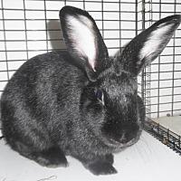 Adopt A Pet :: GRETA - Newport, KY