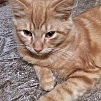 Adopt A Pet :: Tigger - Princeton, NJ
