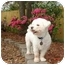Photo 3 - Bichon Frise/Poodle (Miniature) Mix Dog for adoption in Baton Rouge, Louisiana - Rhyden