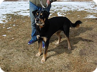 Rottweiler/Husky Mix Dog for adoption in North Judson, Indiana - Sam