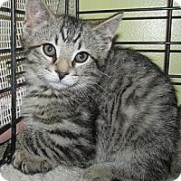 Adopt A Pet :: Hawk - Acme, PA
