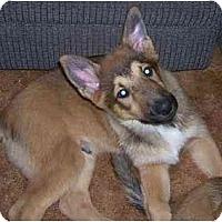 Adopt A Pet :: Sniper - Chandler, IN