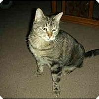 Adopt A Pet :: Tigress - Washington Terrace, UT