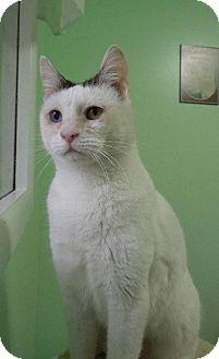 Domestic Shorthair Cat for adoption in HILLSBORO, Oregon - Jasmine
