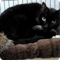 Adopt A Pet :: Boots - Long Beach, WA