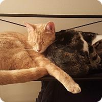 Adopt A Pet :: Felix - Fort Wayne, IN