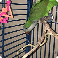 Adopt A Pet :: Beauford - Punta Gorda, FL