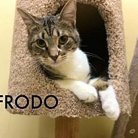 Adopt A Pet :: Frodo - ROSENBERG, TX
