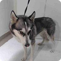 Adopt A Pet :: MIKA - Orlando, FL