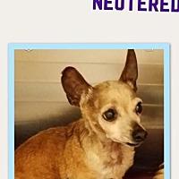 Adopt A Pet :: Shiloh - Columbia, TN