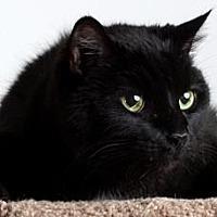 Adopt A Pet :: Jadine - Reno, NV