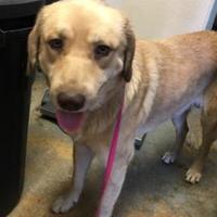 Adopt A Pet :: Tharos - Brownwood, TX