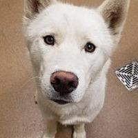 Adopt A Pet :: Everest #169883 - Apple Valley, CA