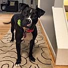Adopt A Pet :: Gracie May