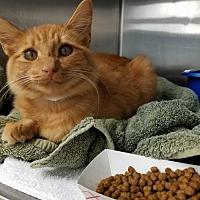 Adopt A Pet :: Bluffy  171819  (Hurricane) - Atlanta, GA