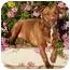 Photo 3 - American Pit Bull Terrier/American Staffordshire Terrier Mix Dog for adoption in El Segundo, California - Elsie