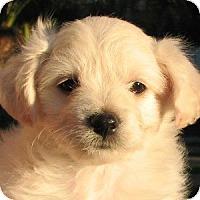 Adopt A Pet :: Kody - La Costa, CA