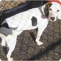 Adopt A Pet :: Lucy - Toronto/Etobicoke/GTA, ON