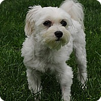 Adopt A Pet :: Perry - Blairstown, NJ
