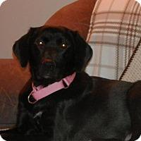 Adopt A Pet :: Noelle - Saskatoon, SK