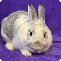 Adopt A Pet :: Whipped Cream - Lewisville, TX